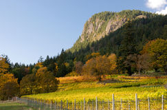 Autumn in a vineyard Royalty Free Stock Photo