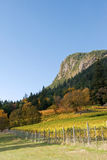 Autumn in a vineyard. Rows of a vines against a rocky hillside are lit by the autumn sun Stock Image