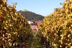 Autumn Vineyard Royalty Free Stock Image