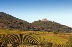 Autumn Vineyard Royalty Free Stock Images