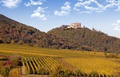 Autumn Vineyard Stock Image