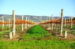 Autumn Vineyard Royalty Free Stock Photo