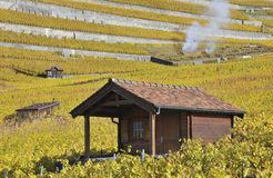 Autumn in the vineyard Stock Image