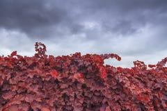 Autumn vineyard on background of sky Stock Image