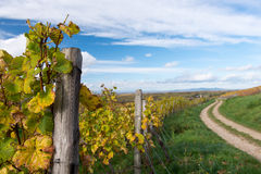Autumn Vineyard Royalty Free Stock Photos