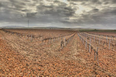 Autumn vineyard field after the harvest Royalty Free Stock Image