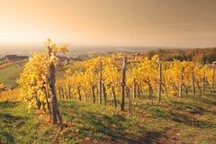 Autumn vineyard Royalty Free Stock Photos