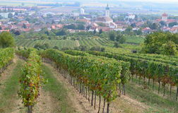 Autumn in the vineyard, Lower Austria Royalty Free Stock Photography