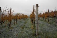 Autumn vineyard. Autumn mist in vineyard in Slovenia Royalty Free Stock Photos