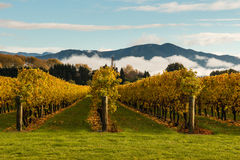 Autumn vineyard with mountains and cloud inversion Royalty Free Stock Image