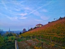 Autumn vineyard over the city. The queen`s vineyard in the hills over the city of turin in italy Royalty Free Stock Photo