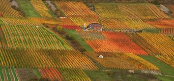 Autumn vineyard scenery Stock Photography