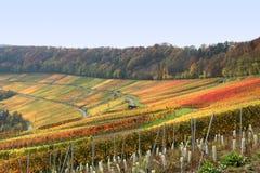 Autumn vineyard scenery Stock Photo