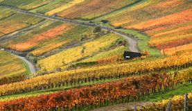 Autumn vineyard scenery Stock Image