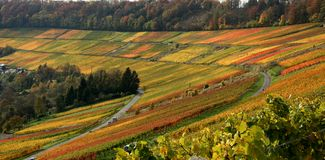 Autumn vineyard scenery. Idyllic rural autumn scenery with lots of colorful vineyards at the Kochertal in Southern Germany Royalty Free Stock Image
