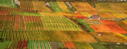 Autumn vineyard scenery Stock Images