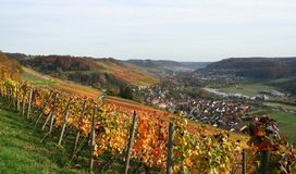 Autumn vineyard scenery. Idyllic rural autumn scenery with lots of colorful vineyards at the Kochertal in Southern Germany Royalty Free Stock Photography