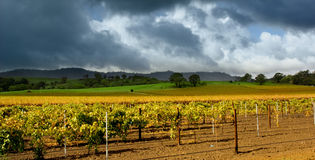 Autumn Vineyard Storm Stock Image