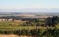 Autumn Vineyard Valley Stock Images
