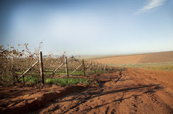 Autumn Vineyards. Dried autumn vineyards in the Swartland wine region of South Africa, sowing farmland and red soil Stock Images