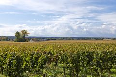 Autumn in vineyards of Bordeaux, France Stock Photo