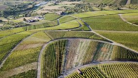 Autumn Vineyards climbing a hillside on a sunny sunset. Streets crossing the fields with bright colors filmed with a stock video footage