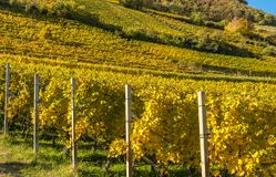 Autumn vineyards field in South Tyrol, Trentino Alto Adige, Italy. Autumn vineyards field in South Tyrol, Trentino Alto Adige, northern italy stock photos