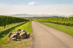 Autumn vineyards landscape in Marlborough, South Island, New Zealand royalty free stock photo