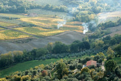 Autumn vineyards, Montepulciano, Italy Stock Images