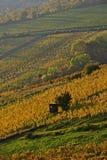Grinzing vineyards vertical stock photos