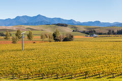 Autumn vineyards in New Zealand at harvest time. Aerial view of autumn vineyards in New Zealand at harvest time stock photo