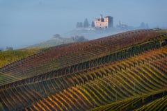 Autumn Vineyards på kullarna Arkivfoton