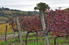 Autumn in the vineyards Royalty Free Stock Photos