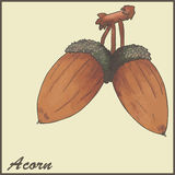 Autumn vintage card with acorns. Illustration Royalty Free Stock Photography