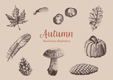 Autumn vintage hand drawn collection. Illustration of leaves, mushroom, pumkin, cones, feather and chestnuts. Botanical. royalty free illustration