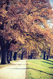 Autumn vintage park alley with trees Stock Photo