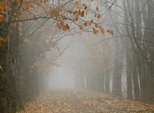 Autumn Vista Stock Afbeeldingen