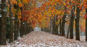 Autumn vista. This is pioneered snow in colorful vista in autumn Stock Photo