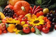 Autumn vitamins Stock Image