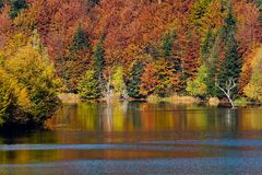 Autumn vivid colors on lake. Autumn on peaceful lake and dense forest in background Stock Photos