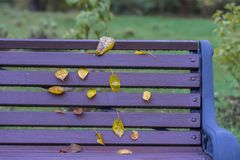 Autumn, vivid purple bench, yellow leaves. Colorful background. Nostalgia, romantic mood concept. Autumn, purple bench, yellow leaves, similar to notes on Royalty Free Stock Photography