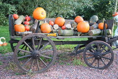 Autumn wagon. An old wooden wagon loaded with wood and pumpkins Stock Image