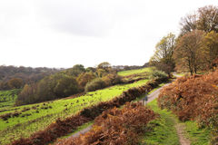 Autumn in Wales Stock Image