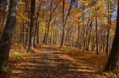 Autumn Walk Lizenzfreie Stockfotografie