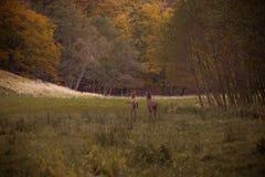 Autumn Walk Fotografia de Stock Royalty Free
