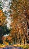 Autumn Walk Lizenzfreies Stockbild