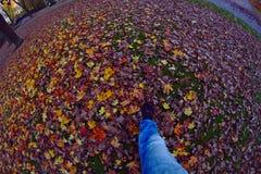 Autumn Walk photographie stock libre de droits