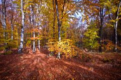 Autumn Walk imagem de stock royalty free