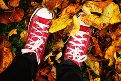 An autumn walk Royalty Free Stock Photo
