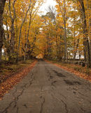 Autumn Walk. Deserted, tree-lined road in the White Mountains of New Hampshire in autumn Royalty Free Stock Photography